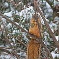Praying Squirrel  by John Rohloff