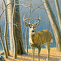 Pre-Flight- Whitetail Buck by Paul Krapf