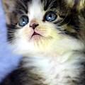 Precious Kitty by Maria Urso