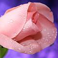 Precious Pink by Krissy Katsimbras