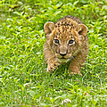Predator In The Making by Ashley Vincent