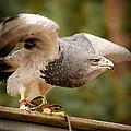 Predator's Raise by Stwayne Keubrick