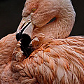 Preening by Wes and Dotty Weber