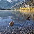 Preening Ducks At Silver Lake by Priya Ghose