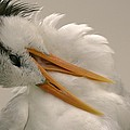 Preening by PMG Images