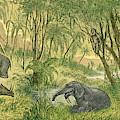 Prehistoric, Miocene Landscape by Science Source