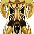 Prehistoric Ram by Daniel P Cronin