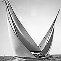 Prelude And Yucca In Regatta by Underwood Archives