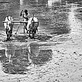 Preparing A Rice Paddy by Tim Gainey