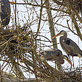 Preparing The Nest by Jack R Perry