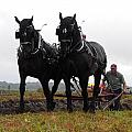 Prescott County Plowing Match by Peggy  McDonald