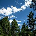 Prescott National Forest Spring Skies by Aaron Burrows