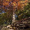 Preserve Trails In Fall Six by Sara Schroeder