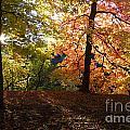 Preserve Trails In Fall Three by Sara Schroeder