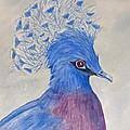 Preston Pigeon by Rich Stedman