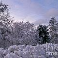 Prettiest Snow Of The Season by Laurie Eve Loftin