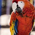 Pretty Bird 2 by Scott Wood