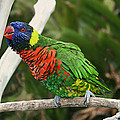 Pretty Bird by Ellen Henneke