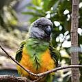Pretty Bird by Jasmin Hrnjic