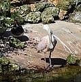Pretty Bird by Linda Kerkau