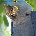 Pretty Bird by Lynn Sprowl