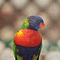 Pretty Bird - Rainbow Lorikeet by Kim Hojnacki