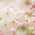 Pretty Blossom by Natalie Kinnear