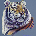 Pretty Boy Siberian Tiger by Mary Dove