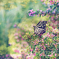 Pretty Butterfly Orange Markings Pink Flowers Green Leaves by Beverly Claire Kaiya