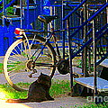 Pretty Cat In Verdun Taking The Sun Blue Picket Fence And Bike Montreal Garden Scene Carole Spandau  by Carole Spandau