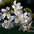 Pretty Flowers by Jeremy Hayden