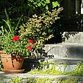 Pretty Gardens by Line Gagne