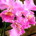 Pretty In Pink Cattleya Orchids by Elaine Plesser