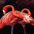 Pretty In Pink by David Stribbling