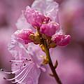 Pretty In Pink by Eryn Carter