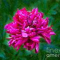 Pretty In Pink Garden Art By Omaste Witkowski by Omaste Witkowski