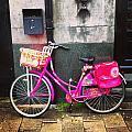 Pretty In Pink  by Jennifer  MacNeill