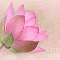 Pretty In Pink Lotus Blossom by Sabrina L Ryan