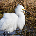 Pretty In White by John Absher
