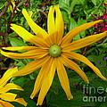 Pretty In Yellow by Donato Iannuzzi