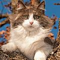 Pretty Kitty High Up by Sari ONeal