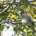 Pretty Little Bird by Charlotte Stevenson