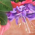 Pretty Little Fuchsia by Peggy Hughes