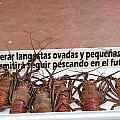 Pretty Lobsters by Allan Morrison