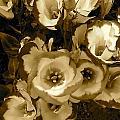 Pretty Petals 2 by Denise Mazzocco