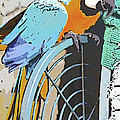 Pretty Polly by Diane Macdonald