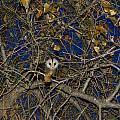 Pretty Pretty Possum Iv by Vernis Maxwell