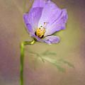 Pretty Purple Flower by Sabrina L Ryan