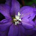 Pretty Purple Petals by Lori Tambakis