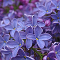 Pretty Purple Things by Juergen Roth